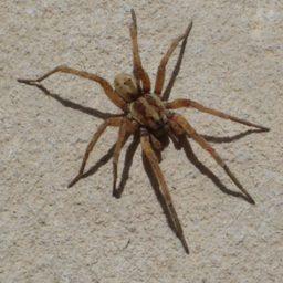 Уничтожение пауков в Заводоуковске